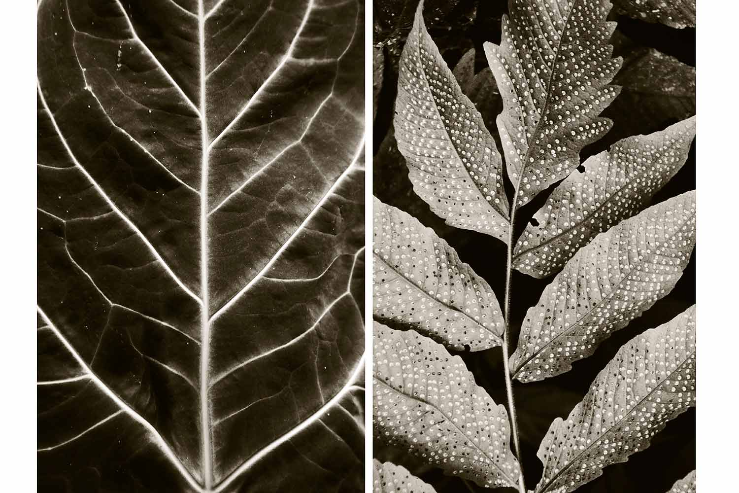 Veins and spores