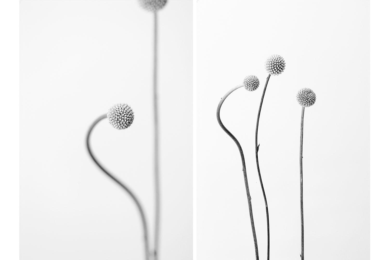 Flor- dots