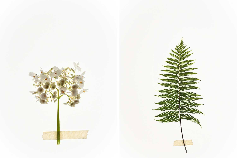 Flor-Lightbox