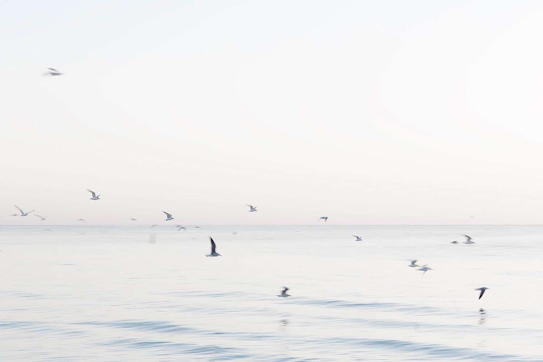 M.E birds