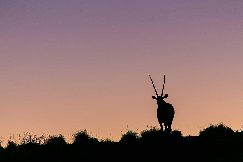 When the sun goes down in the Namibian desert