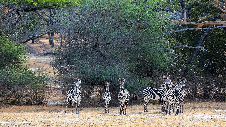 Selous. Tanzania