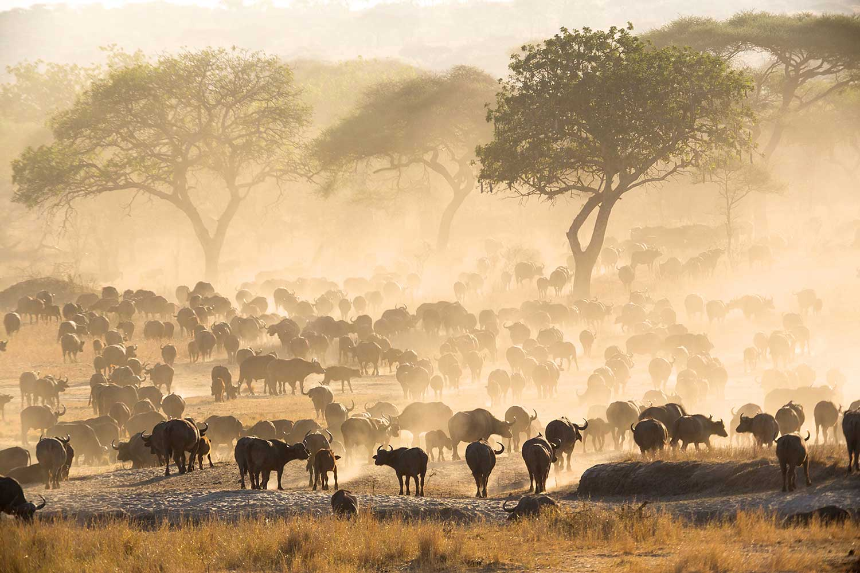 Tarangire. Tanzania