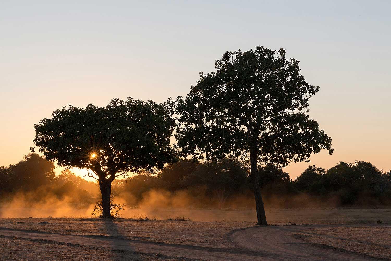 South Luangwa. Zambia.